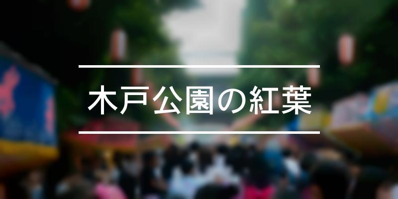 木戸公園の紅葉 2019年 [祭の日]