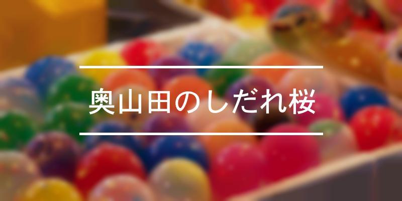 奥山田のしだれ桜 2020年 [祭の日]