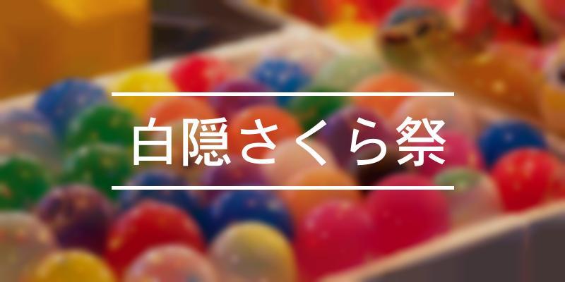 白隠さくら祭 2020年 [祭の日]