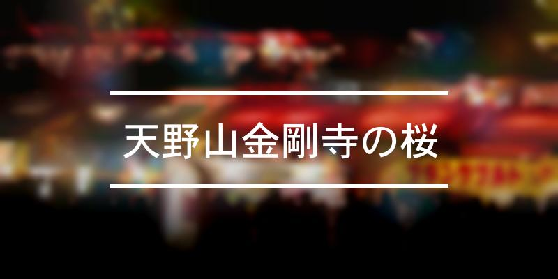 天野山金剛寺の桜 2020年 [祭の日]
