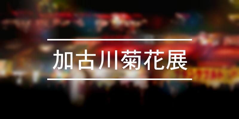 加古川菊花展 2020年 [祭の日]
