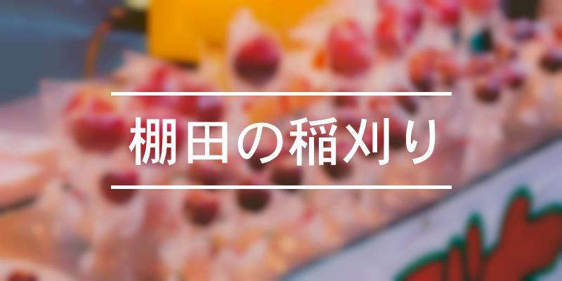 棚田の稲刈り 2020年 [祭の日]