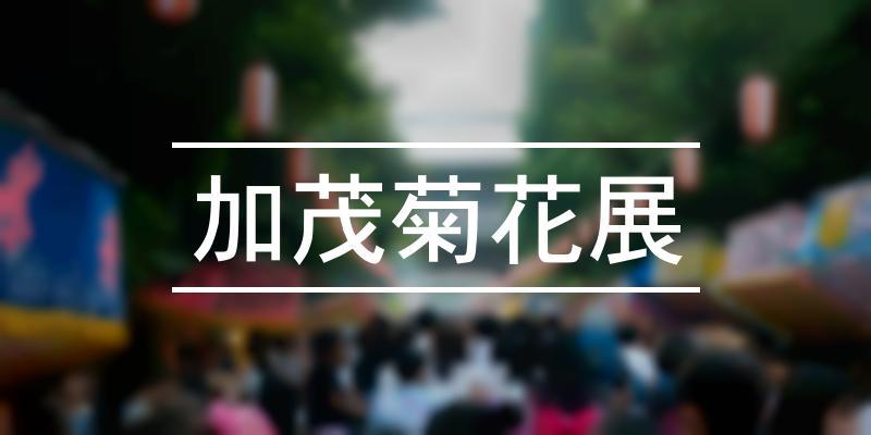 加茂菊花展 2020年 [祭の日]