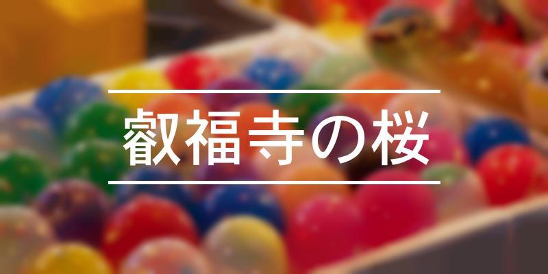 叡福寺の桜 2021年 [祭の日]