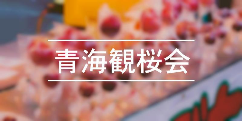 青海観桜会 2021年 [祭の日]