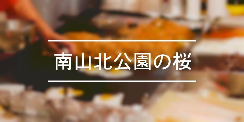 南山北公園の桜 2021年 [祭の日]