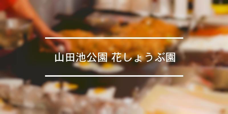 山田池公園 花しょうぶ園 2021年 [祭の日]