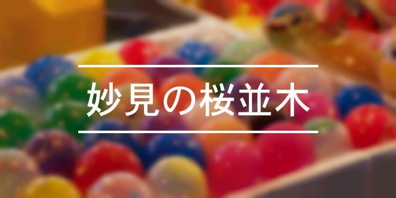 妙見の桜並木 2021年 [祭の日]