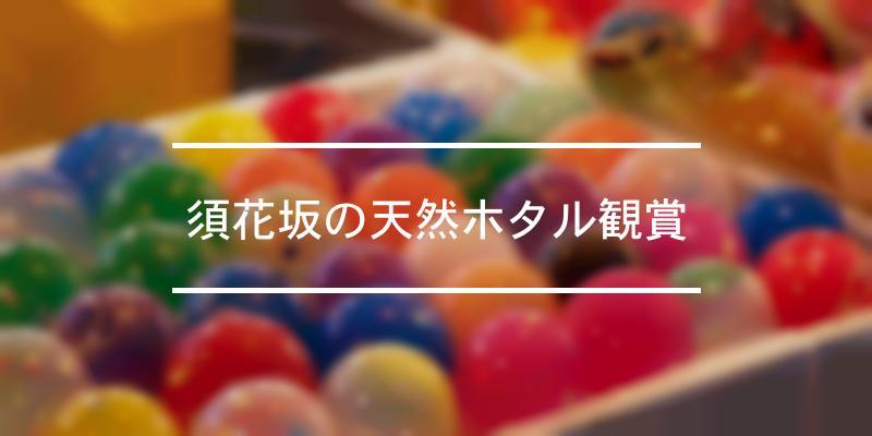 須花坂の天然ホタル観賞 2021年 [祭の日]
