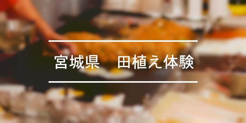 宮城県田植え体験 2021年 [祭の日]